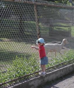 High Park Zoo